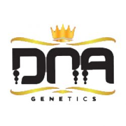 dna-genetics-feminized-1461463138